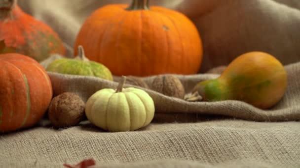 Pohyb fotoaparátu na složení dýní, vlašských ořechů a podzimních listů. Padající podzimní listí zpomaleně. Podzimní zátiší. Halloween holiday.