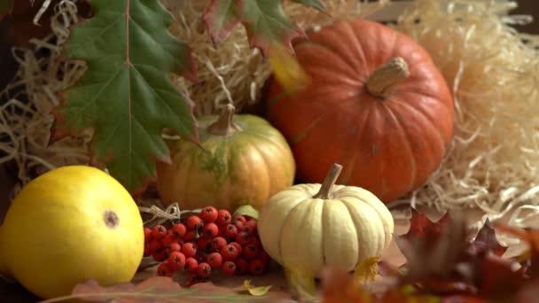Složení dýní a podzimních listů. Padající podzimní listí zpomaleně. Podzimní zátiší. Halloween holiday.