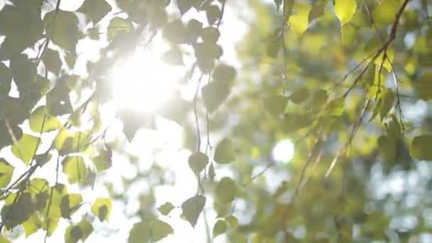 Listí na stromě na slunci