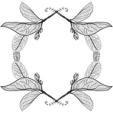 Leaves contours