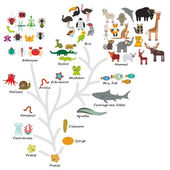 Evolution in biology, scheme evolution of animals isolated on white background. childrens education, science. Evolution scale from unicellular organism to mammals. Vector