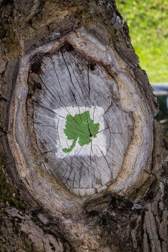 Ağaç Boyama üzüm Asma Yaprağı Stok Foto Yassminphoto 106383644