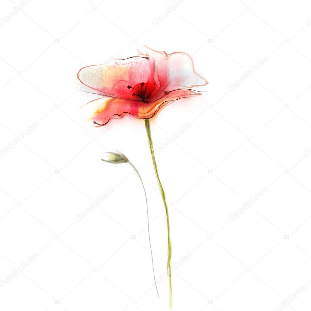 Watercolor Painting Poppy Flower Isolated Red Flower On White
