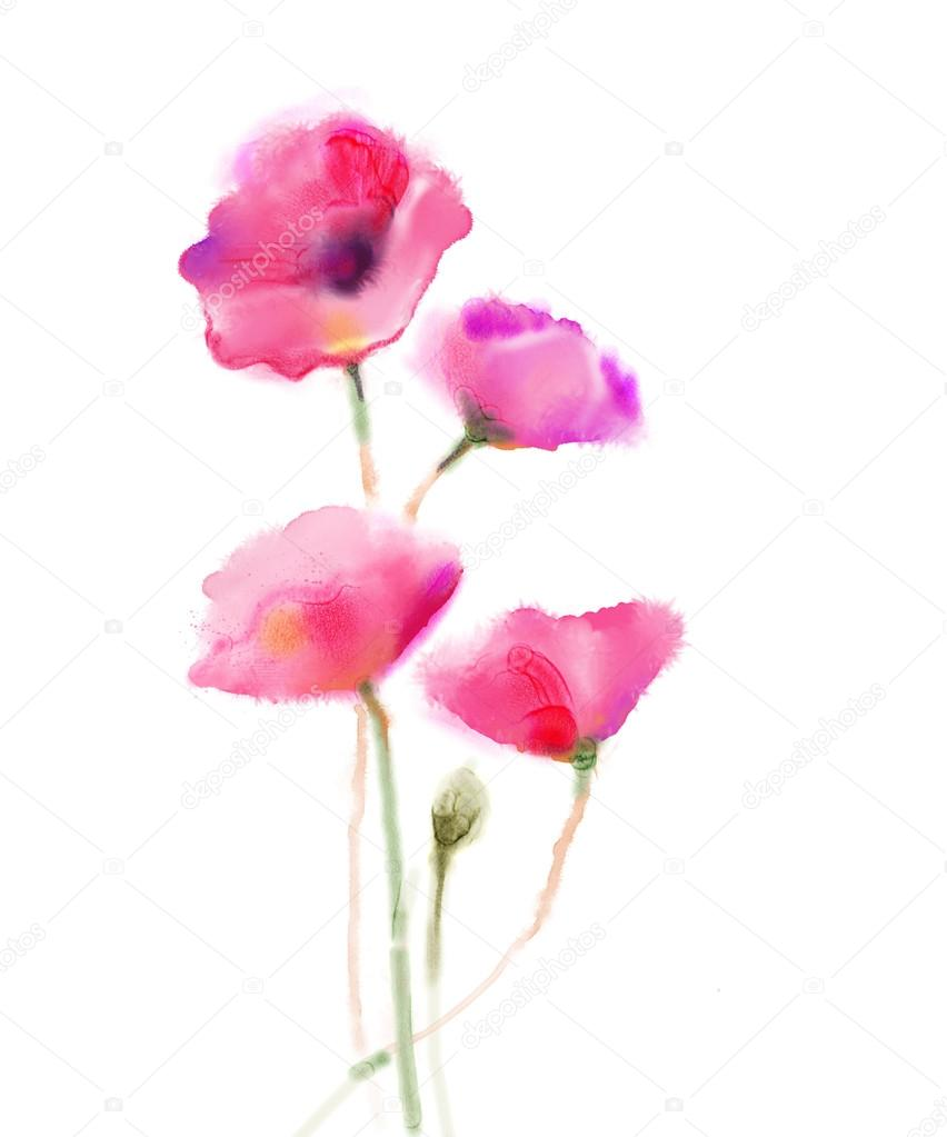 Watercolor Painting Poppy Flower Isolated Red Flowers On White