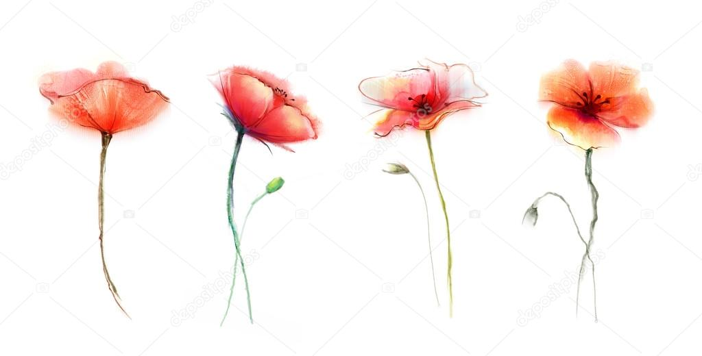Watercolor painting poppy flower isolated flowers on white watercolor painting poppy flower isolated flowers on white background stock photo mightylinksfo