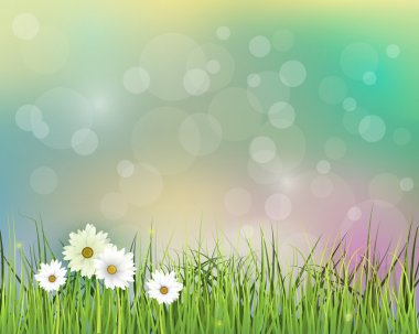 Vector illustration Spring nature field with green grass, white Gerbera- Daisy flowers at meadow and water drops dew on green leaves
