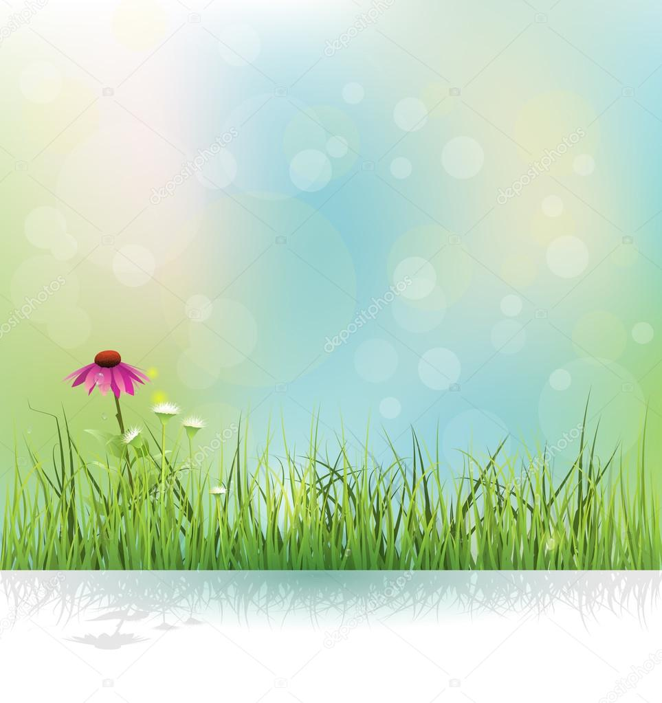 Vector illustration Spring nature field, green grass, white flowers meadow and echinacea ( purple coneflower) flower with shadow.