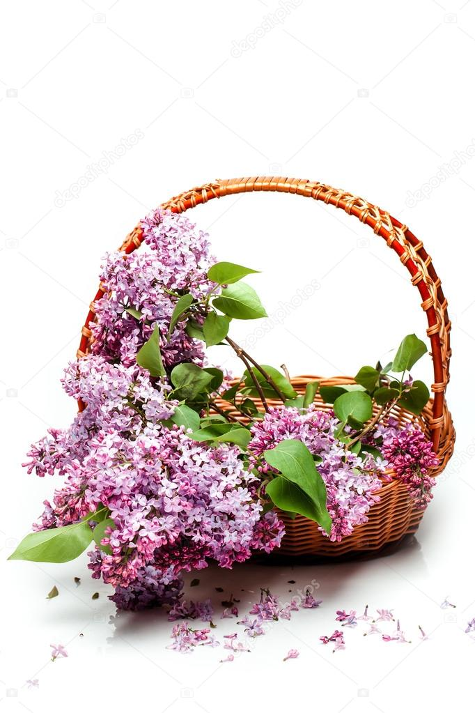Lila Blumen im Korb isoliert auf weiss — Stockfoto © Tverdohlib.com ...
