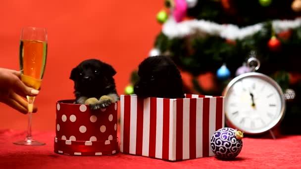 Vicces kutyus ünnepli a karácsonyt. Igyál pezsgőt. Gog az újévi bulin..