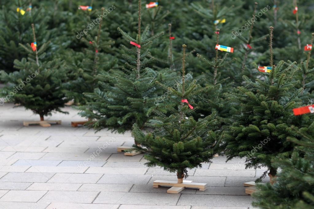 Sale of Christmas trees in the new year