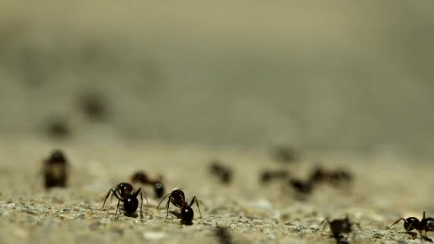 Crawling Termite, Flow of Ants, Life Movement, Seamless loop. Teamwork Concept