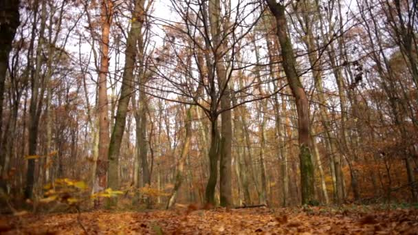 November in the forest, the leaves fall to the ground, autumn