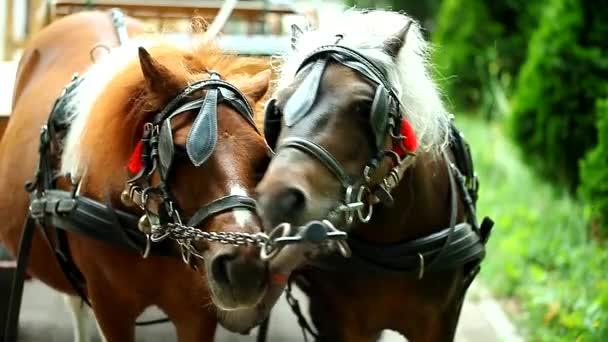 Těhotná koně a manželem na ulici čelem k