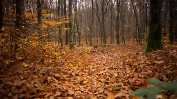 wild forest in the autumn