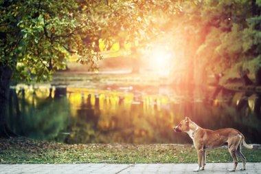 Picturesque view of golden autumn