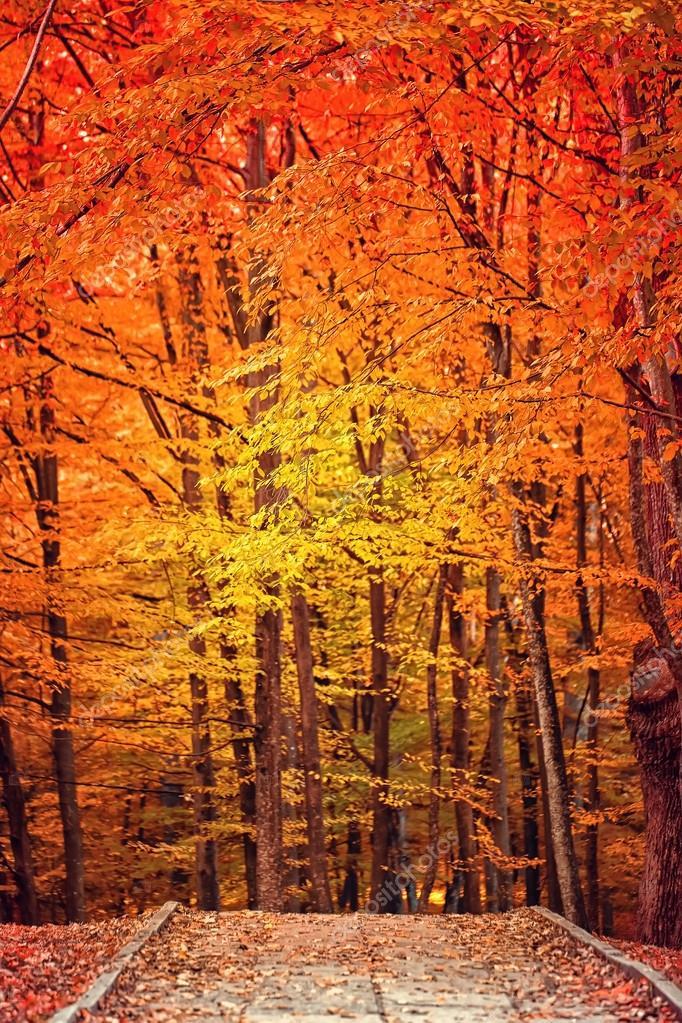 Autumn landscape in park