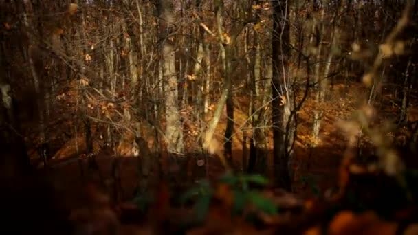 žluté listy v lese