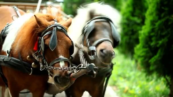 dva koně v parku a majitel