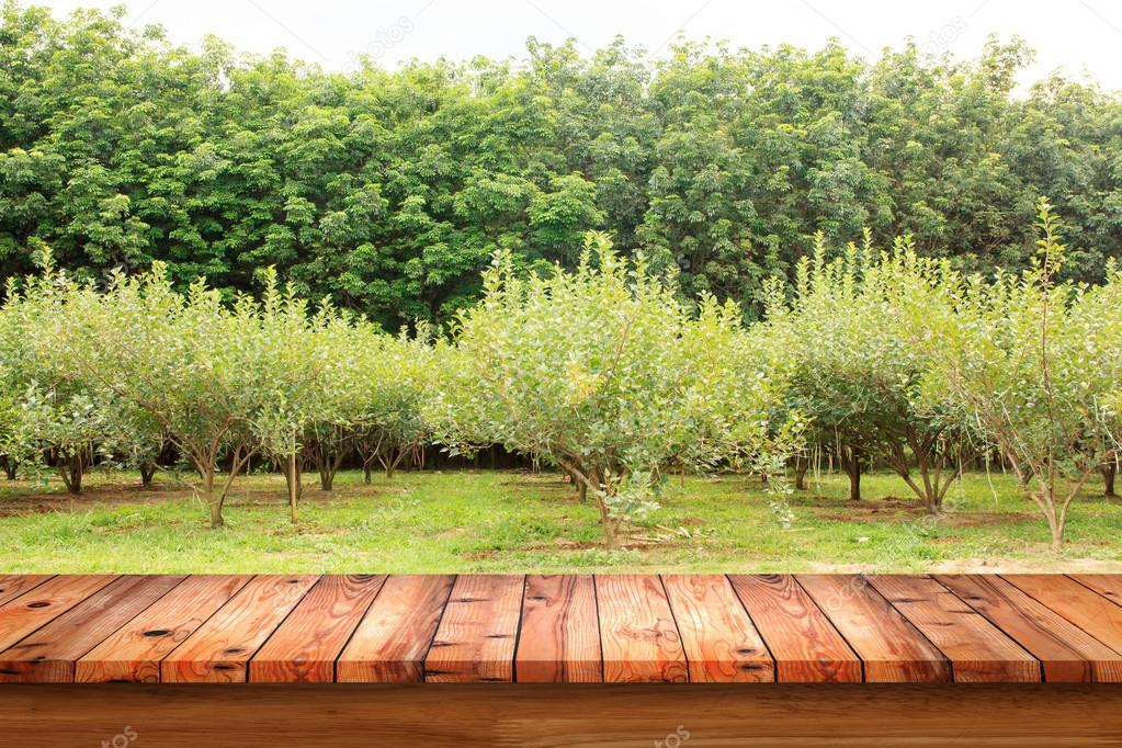 Empty old wooden table with mulberry fruit trees and rubber
