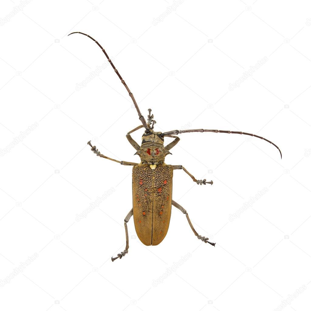 Arten Von Bock Käfer Stockfoto Jpkirakun 123663384