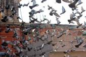 Fotografie Many pigeons flying on the background of the roofs of ancient buildings of Jaipur