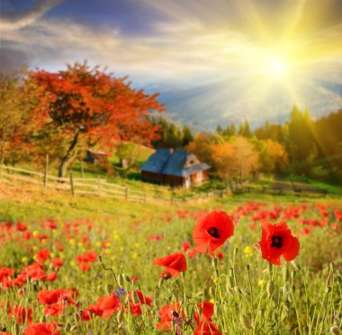 Scenic landscape with flowers poppies on a background of mountai