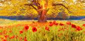 Photo Scenic landscape with poppies flowers and trees with yellow leav