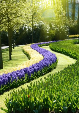 The charming view from wavy flowers tulips and hyacinths in the