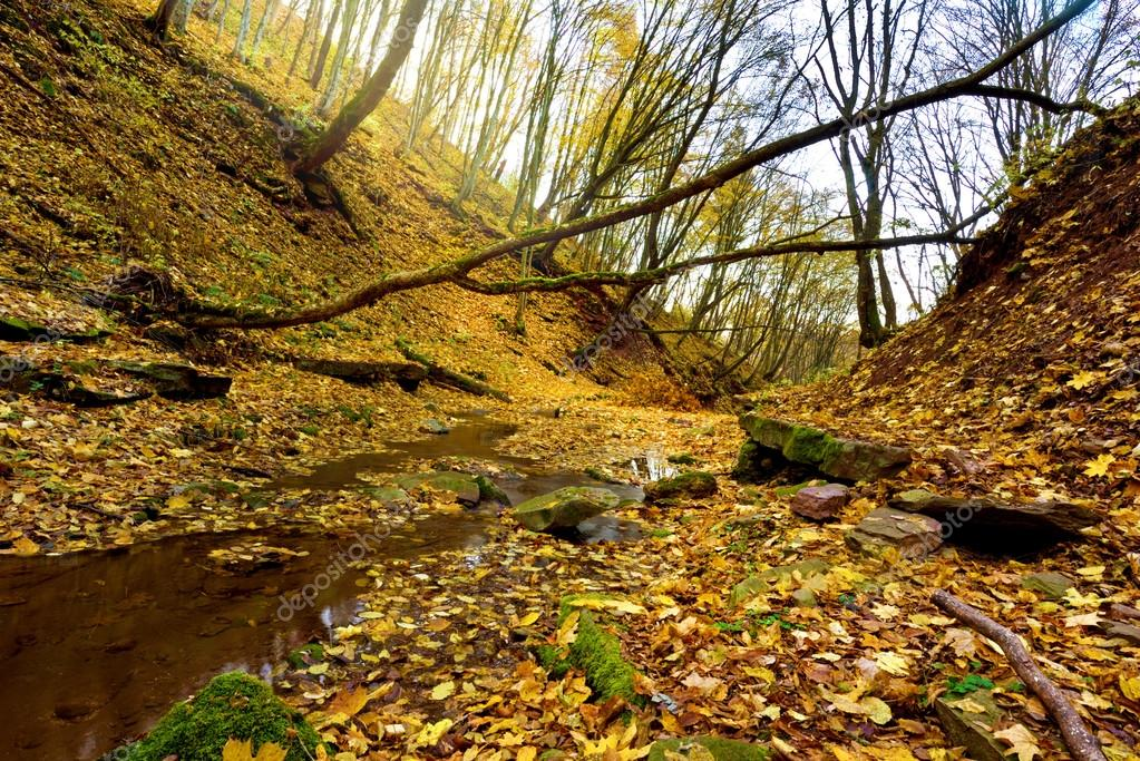Mystical landscape in the autumn forest (light, good and evil, e