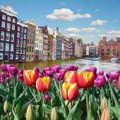 Fotografie Beautiful landscape of tulips on the background of the channel a