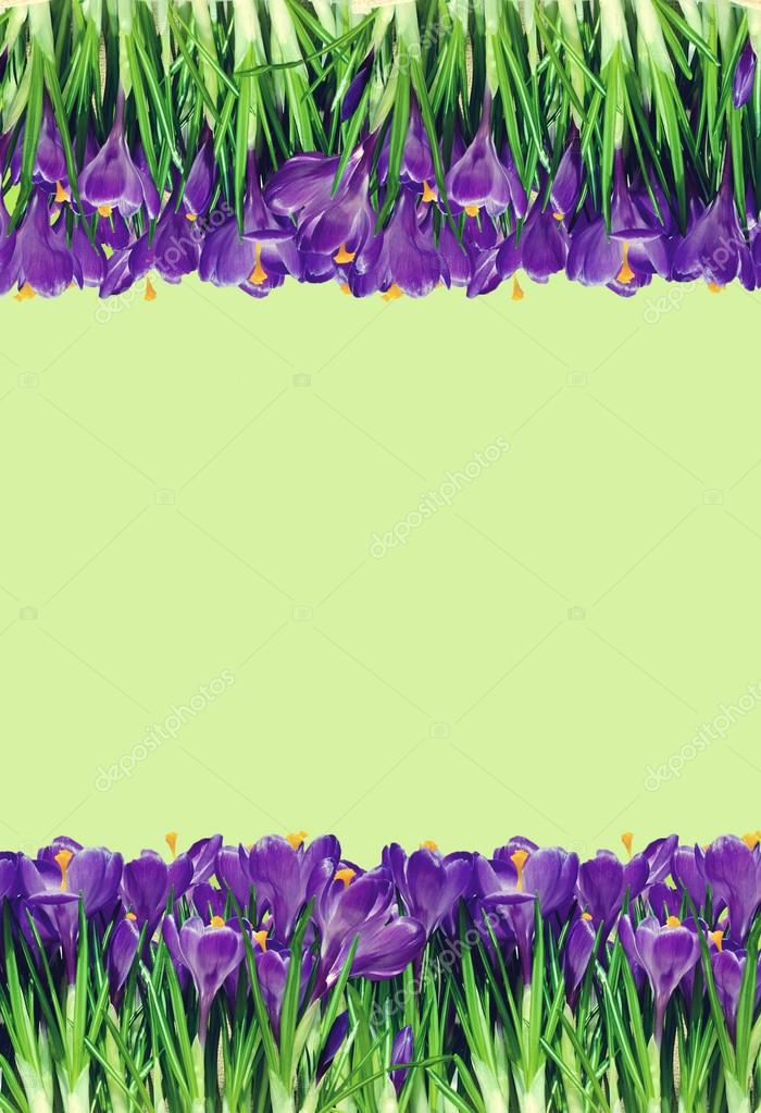 Abstrakt background with crocuses for greetings (March 8, Februa
