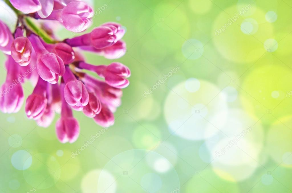 Natural Spring background with lilac and bokeh effect for greeti