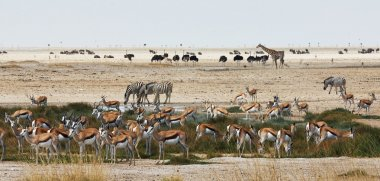 African animals close to a waterhole