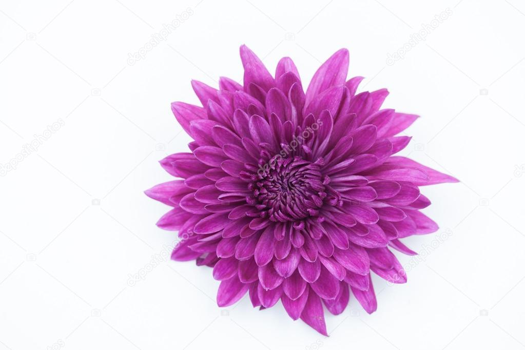 Цветок рябчик  Начинающему цветоводу