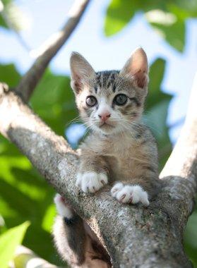 adorable cat kitten