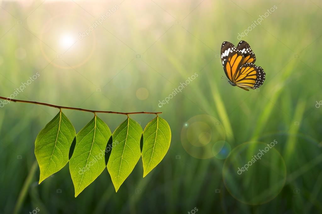 butterfly and green leaf on sunlight in nature