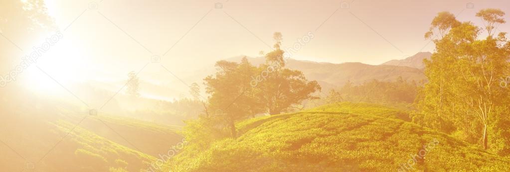 Sunrise over Tea Plantation