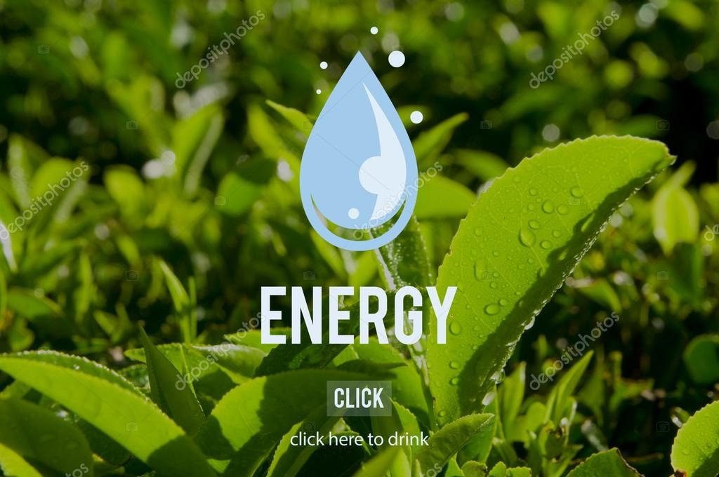 Energy Environment Ecology