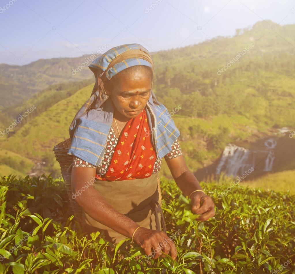 Women Tea Pickers in Sri Lanka