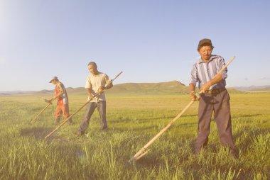 Mongolian Farmers Working in field