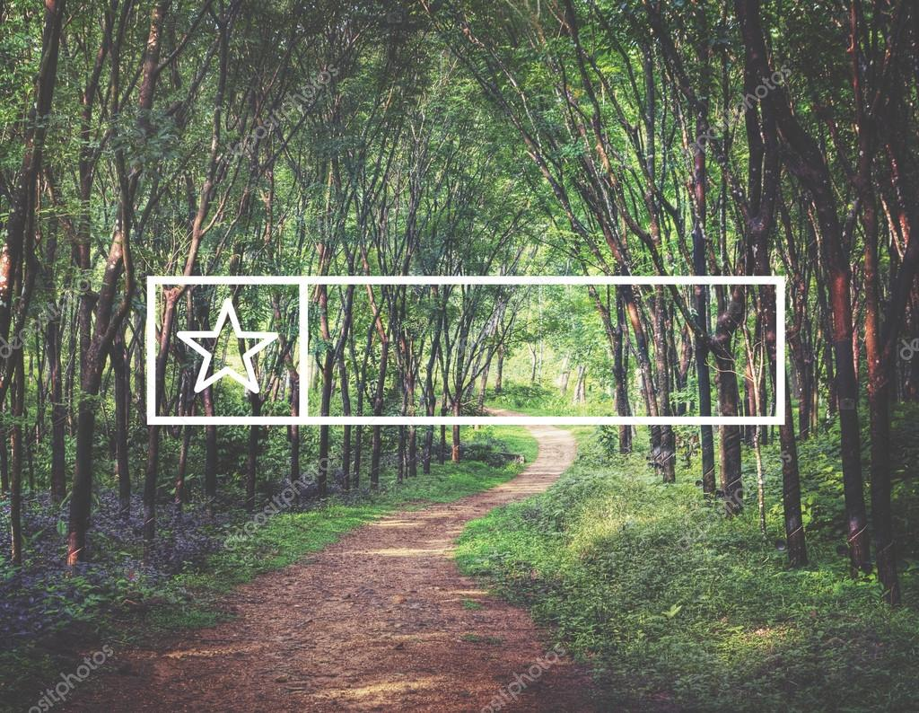 Enchanting forest lane