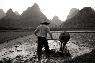 Man is ploughing rice paddy, Guangxi