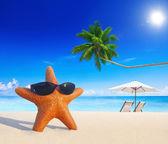 Fotografia stelle marine sulla spiaggia tropicale