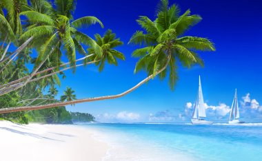 Sailboats on beach and palm trees