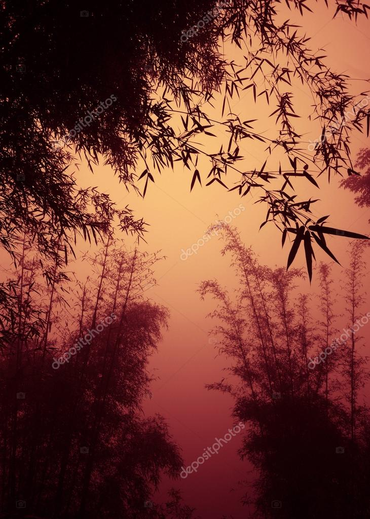 Bamboo forest as dusk