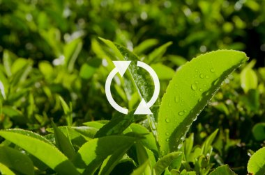 Refresh Icon and green grass