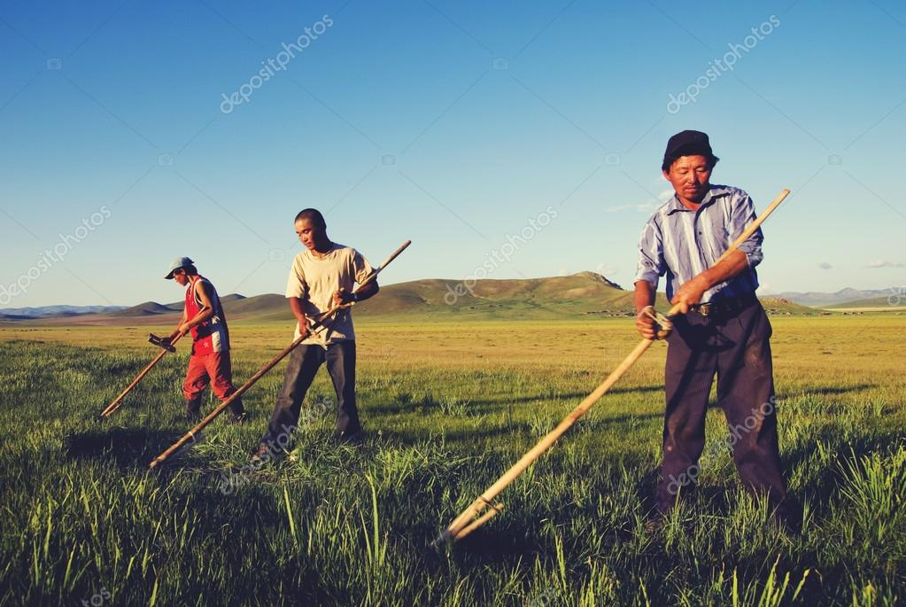Mongolian Farmers Working