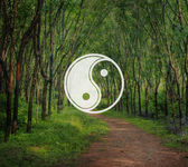 Yin Yang, Balance, Contrast  Concept
