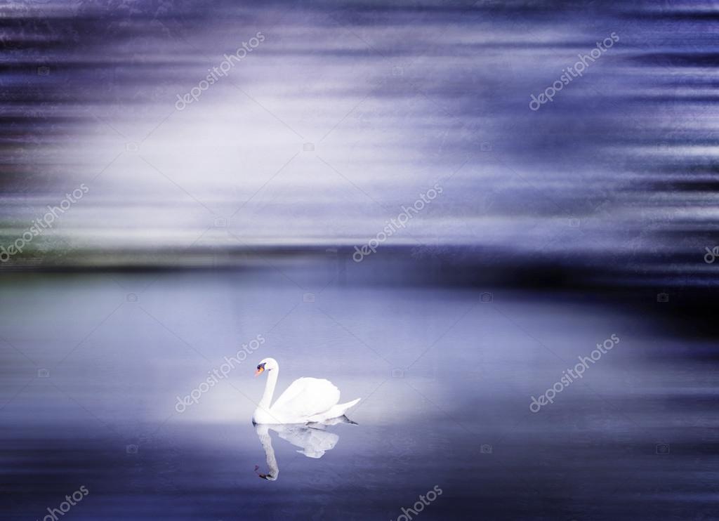 Beautiful Swan on Lake Japan