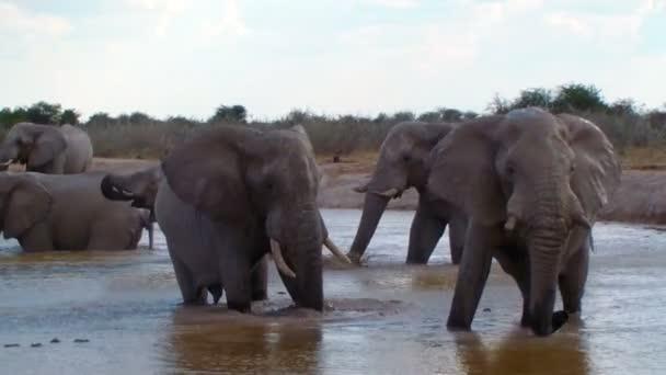 Elefantenfamilie badet im Wasserloch Afrikas